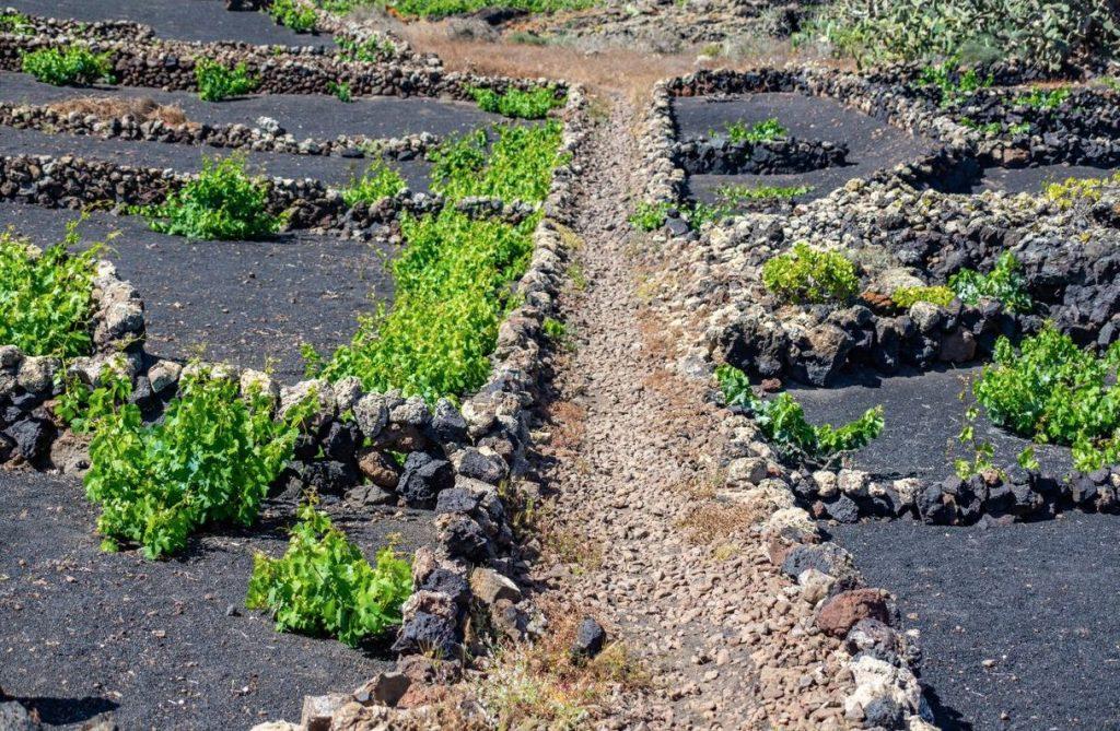 ESD- Post Senderismo 4 Turismo Lanzarote