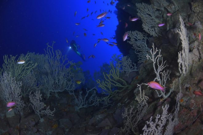 Discover five magical diving spots in Lanzarote