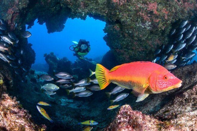 A la búsqueda de nuevos 'tesoros' submarinos de Lanzarote